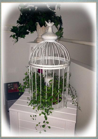 birdcage1