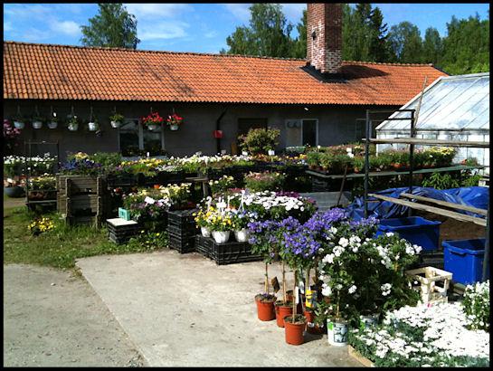 blomhandel2