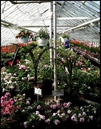 blomhandel6