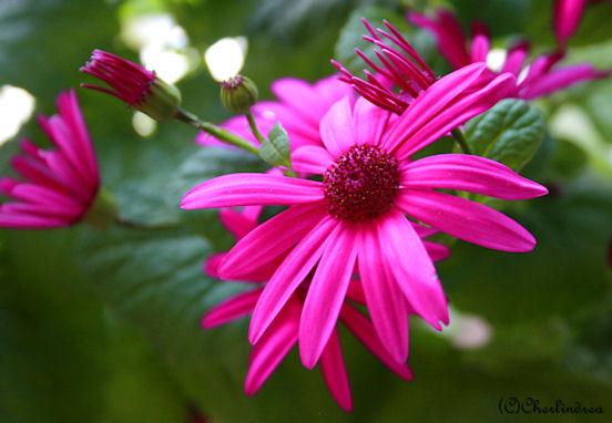 blommaorg1