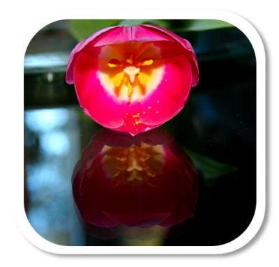 blomsterbild1