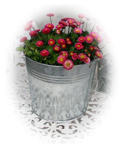 blomsterhink11