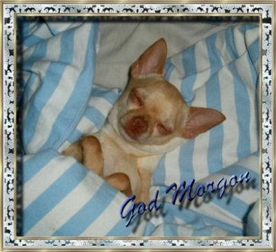 god-morgon-loxy13