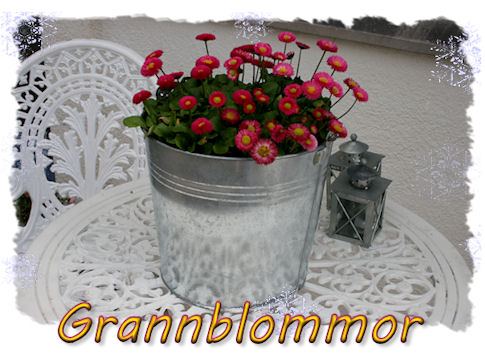 grannblommor1