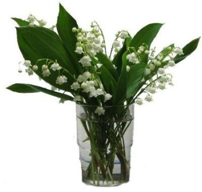 lillie2
