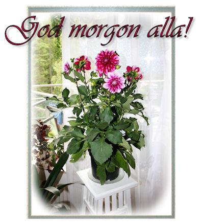 morgonblom13