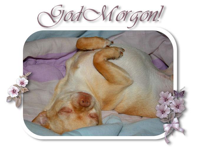 morgonloxy61