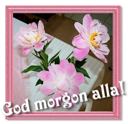 pink-morning1