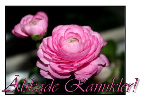 ranukel2
