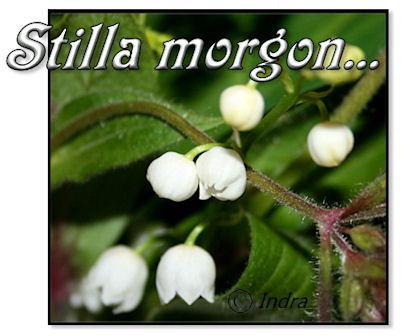 stilla-morgon1