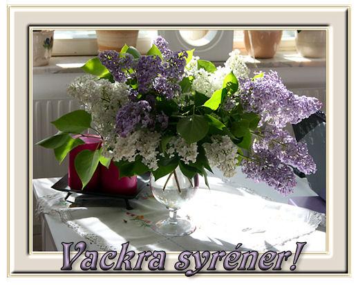 syrener2
